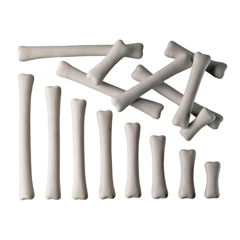 DINOSAUR BONES MATCH & MEASURE SET